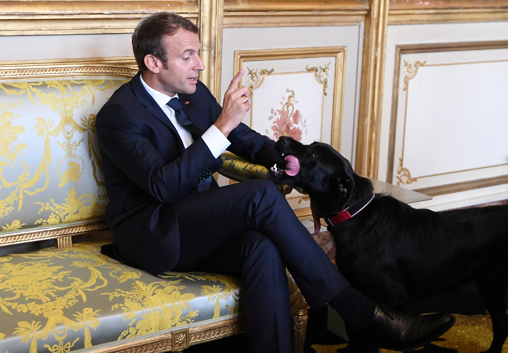 French president Emmanuel Macron gestures towards his dog Nemo during a meeting with German Vice Chancellor and German Foreign Minister at the Elysee Palace in Paris